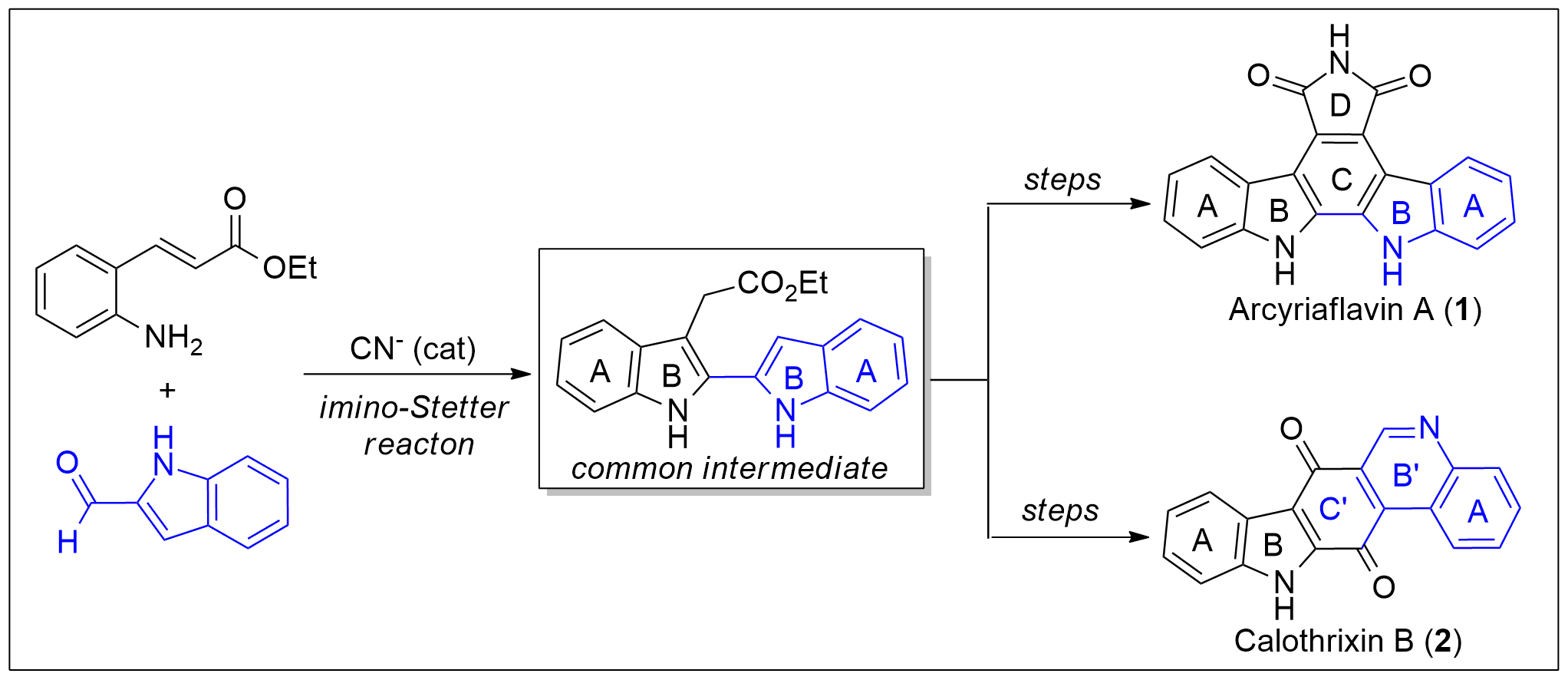 Divergent Total Syntheses of Arcyriaflavin A and Calothrixin B.png